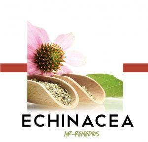 beneficios equinacea
