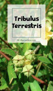 tribulus terrestris beneficios